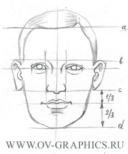 Пропорции лица человека
